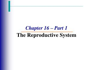 Chapter 16 – Part 1 The Reproductive System