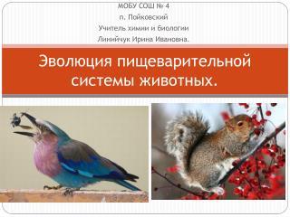 Эволюция пищеварительной системы животных.
