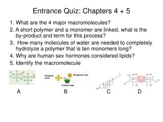 Entrance Quiz: Chapters 4 + 5