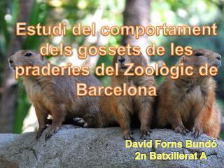 Estudi  del  comportament dels gossets  de les  praderies  del  Zoològic  de Barcelona