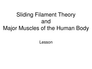 Sliding Filament Theory and  Major Muscles of the Human Body