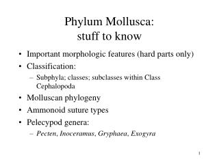 Phylum Mollusca: stuff to know