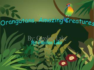 Orangutans, Amazing Creatures