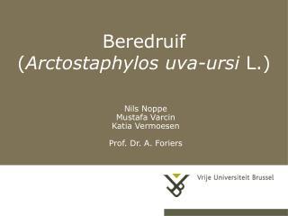 Beredruif  ( Arctostaphylos uva-ursi  L.)