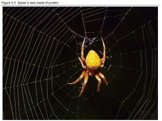 Figure 5.0  Spider's web made of protein