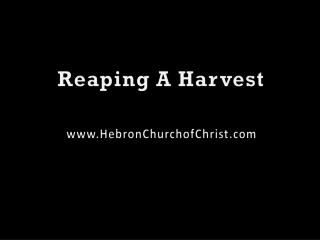 Reaping A Harvest