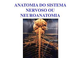 ANATOMIA DO SISTEMA NERVOSO OU NEUROANATOMIA