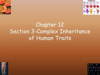 Chapter 12 Section 3-Complex Inheritance of Human Traits