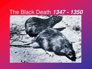 The Black Death  1347 - 1350