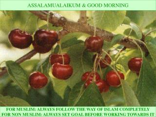 FOR MUSLIM: ALWAYS FOLLOW THE WAY OF ISLAM COMPLETELY