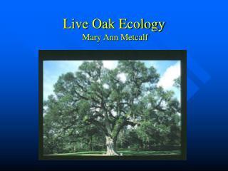 Live Oak Ecology  Mary Ann Metcalf