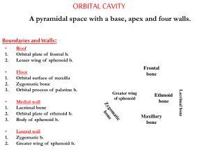 ORBITAL CAVITY