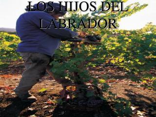 LOS HIJOS DEL LABRADOR