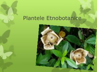 Plantele Etnobotanice