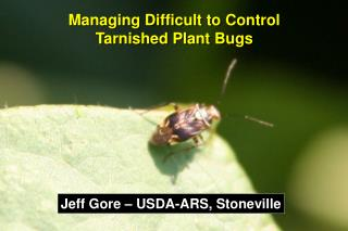 Managing Difficult to Control  Tarnished Plant Bugs