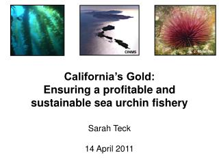 California's Gold:  Ensuring a profitable and sustainable sea urchin fishery