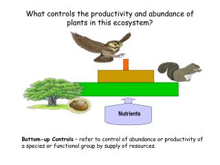 What controls the productivity and abundance of plants in this ecosystem?