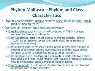 Phylum Mollusca   Phylum and Class Characteristics