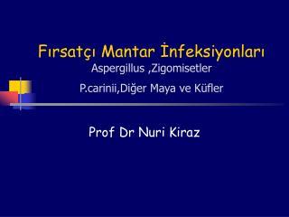 Fırsatçı Mantar İnfeksiyonları Aspergillus ,Zigomisetler  Prinii,Diğer Maya ve Küfler