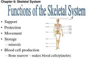 Chapter 6: Skeletal System