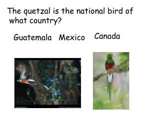 The quetzal is the national bird of  what country?
