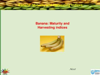 Banana: Maturity and Harvesting indices