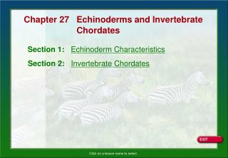 Section 1:    Echinoderm Characteristics