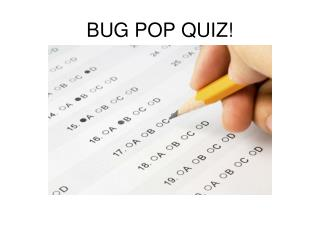 BUG POP QUIZ!