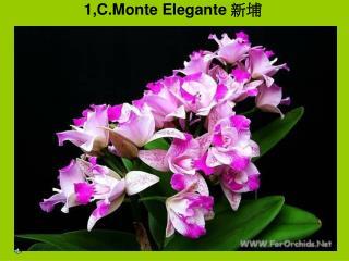 1,C.Monte Elegante  新埔