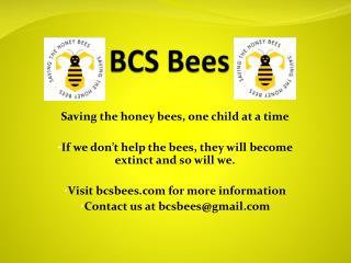 BCS Bees