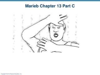 Marieb Chapter 13 Part C