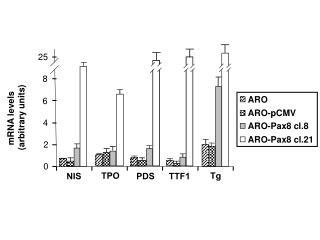 mRNA levels  (arbitrary units)