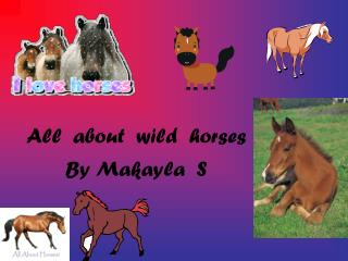 All  about  wild  horses