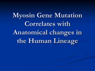 Myosin Gene Mutation Correlates with Anatomical changes in the Human Lineage