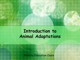 Introduction to  Animal Adaptations