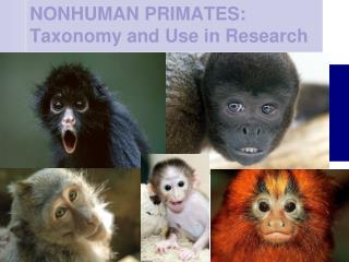 NONHUMAN PRIMATES: Taxonomy and Use in Research