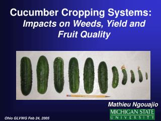 Cucumber Cropping Systems: Impacts on Weeds, Yield and Fruit Quality