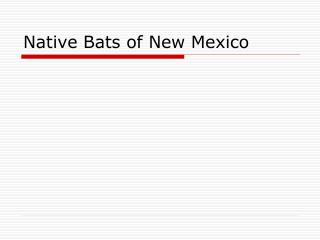 Native Bats of New Mexico