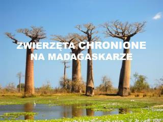 ZWIERZĘTA  CHRONIONE  NA MADAGASKARZE