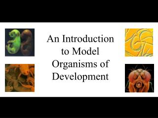 An Introduction to Model Organisms of Development