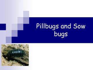 Pillbugs and Sow bugs