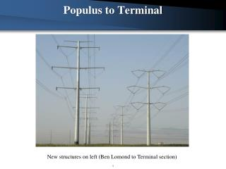 Populus to Terminal