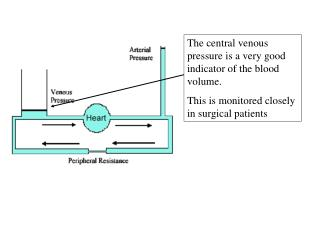 The central venous pressure is a very good indicator of the blood volume.