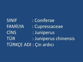 SINIF             : Coniferae FAMİLYA       : Cupressaceae CİNS              : Juniperus