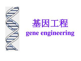 基因工程 gene engineering