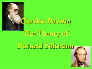 Charles Darwin The Theory of  Natural Selection