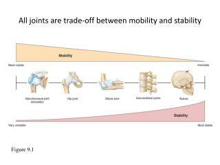 All joints are trade-off between mobility and stability