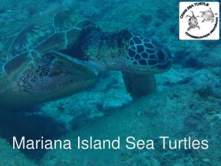 Mariana Island Sea Turtles
