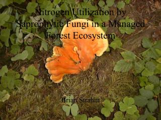 Nitrogen Utilization by Saprophytic Fungi in a Managed Forest Ecosystem