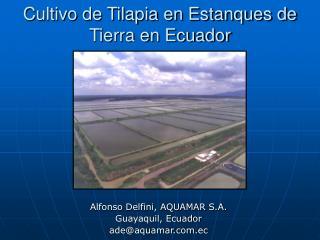 Cultivo de Tilapia en Estanques de Tierra en Ecuador